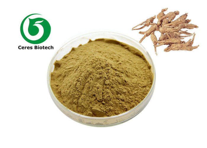 10/1 Herbal Extract Powder Dong Quai Extract Angelica Sinensis Extract Powder 80 Mesh